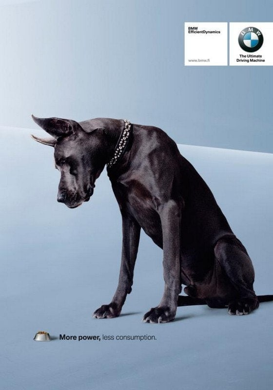 bmw-dog-small-49527