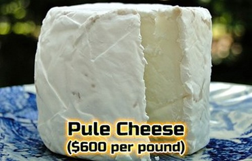 Most Expensive Cheese