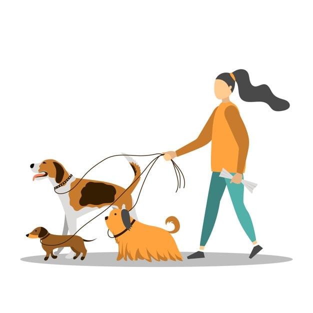 Dog walker how to start a business