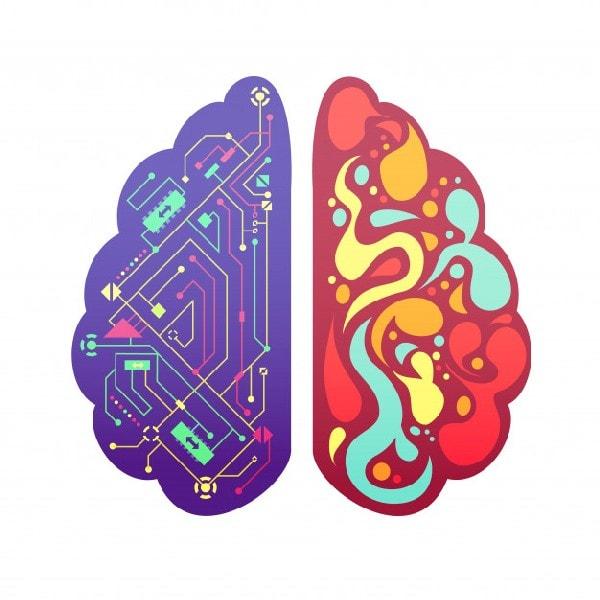 Emotions & Brain
