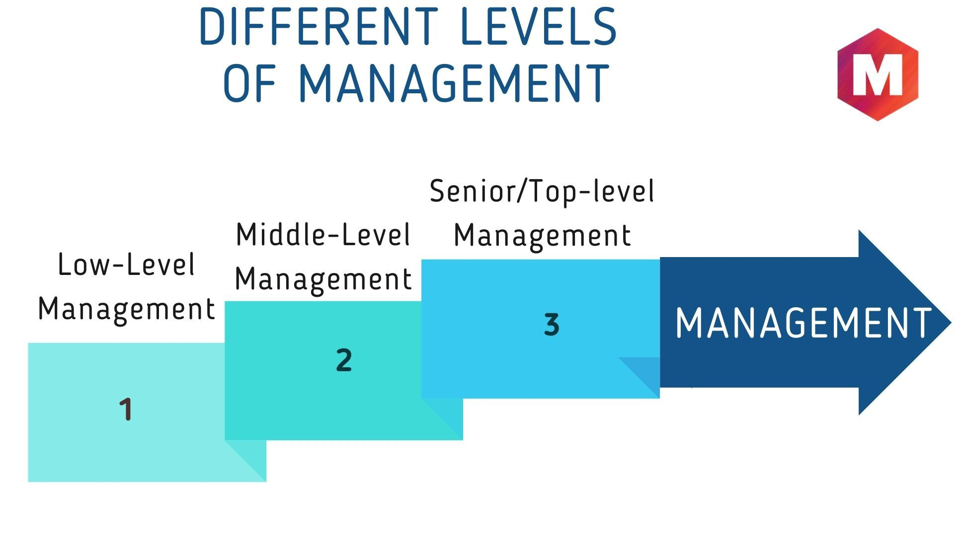 What are the different levels of Management